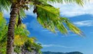 Palmy, plaża