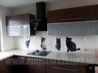 Koty chodzące po blacie, rodzina kotów, zdjęcia zrobione i przesałene przez Klienta