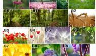 Kwiaty 3